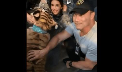(続報)トラを違法に飼育していた男性がトラを連れて逃亡――ようやくトラが発見される