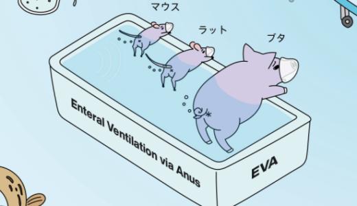 特殊な方法でマウスやブタにお尻から呼吸させることに成功――東京医科歯科大学