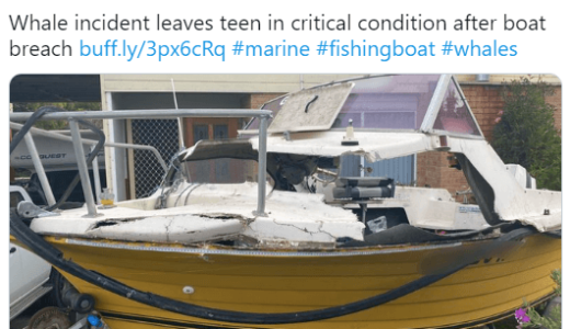 ジャンプしたクジラがボートに落下、1人が意識不明の重体――オーストラリア