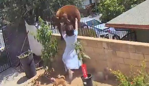 民家に侵入したクマを17歳の少女が突き落として犬を無事救助(動画)――アメリカ・ロサンゼルス