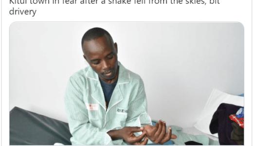 ワシが走行中の車に毒蛇を落とし、運転手の男性が噛まれる――ケニア