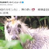 宮城県の寺院で4つ目のカモシカが目撃される、「神の使い」との声も