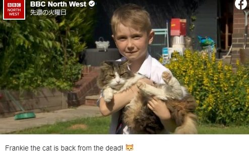 火葬したはずの猫がなぜか1週間後に家に戻ってくる――イギリス