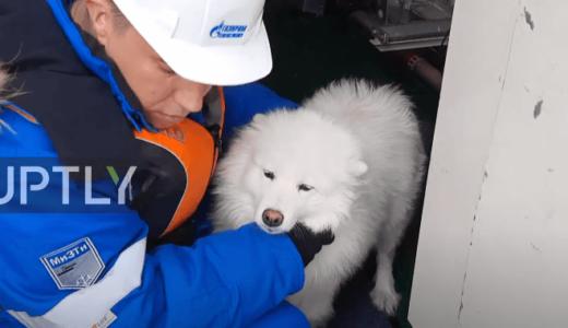 北極圏で1週間以上も迷子になっていた犬を発見、砕氷船により救出に成功