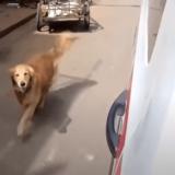 救急車で搬送される飼い主を追いかけ、病院まで付いてくる犬が話題に――トルコ・イスタンブール