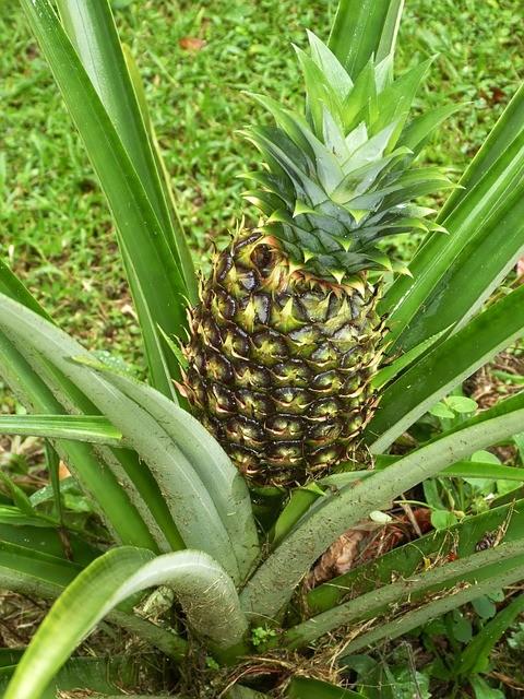 pineapple-287313_640